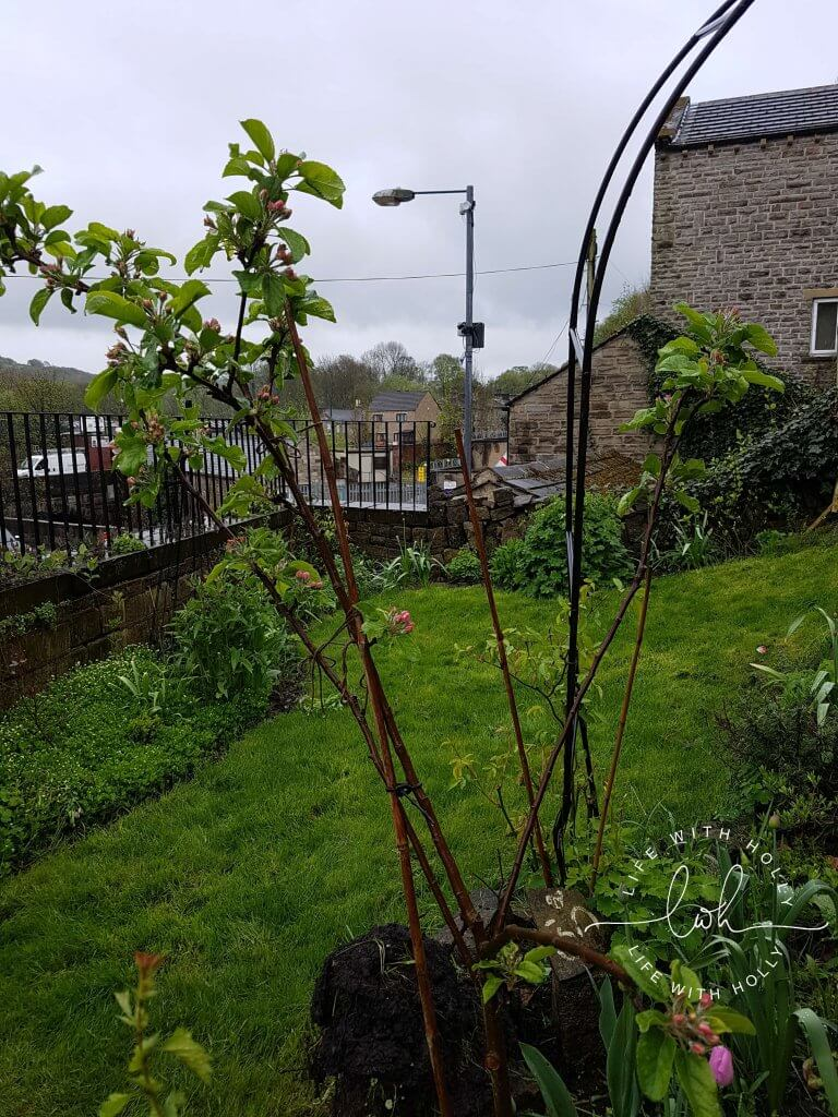 North Facing Yorkshire Garden - My Garden in May - Life with Holly