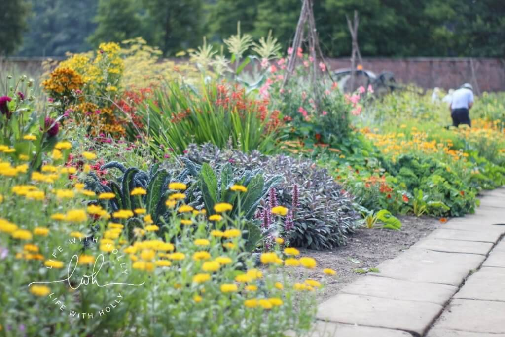 Beautiful Potager Style Garden - Sunflowers in Victorian Conservatory - Harewood House - Seeds of Hope Exhibition - Life with Holly Blog