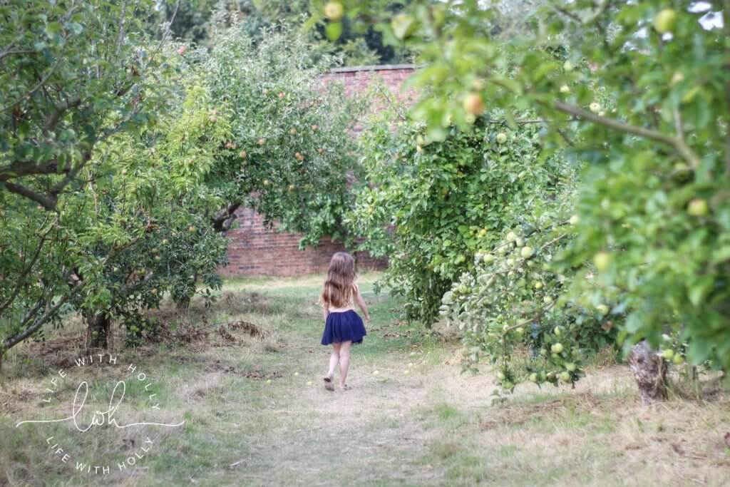Apple Orchard - Sunflowers in Victorian Conservatory - Harewood House - Seeds of Hope Exhibition - Life with Holly Blog