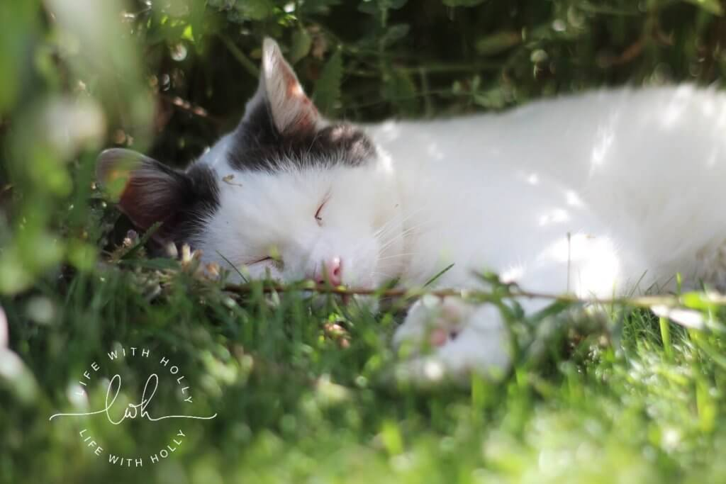 White Cat Asleep in Garden - Life with Holly Blog
