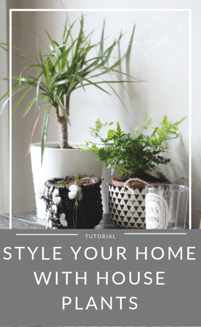 Style Your Home Using House Plants