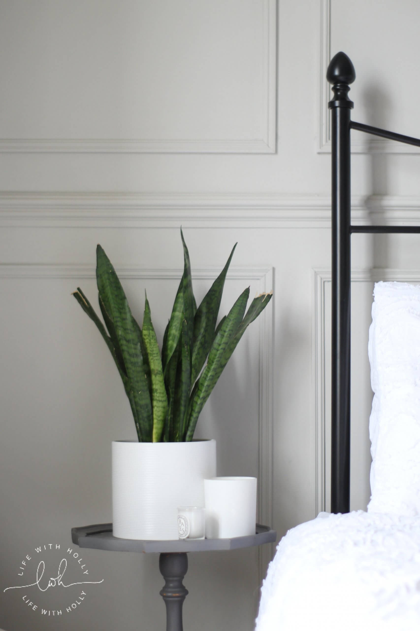 Snake Plant Sanseviera - - House Plants for Period Properties - House Plants that Don't Die in VIctorian Houses
